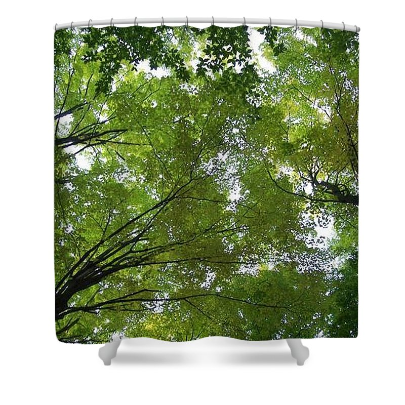Photography Shower Curtain featuring the photograph Into The Trees by Michael TMAD Finney