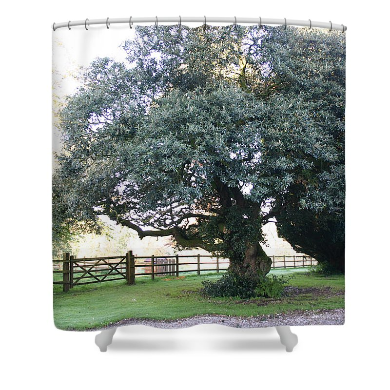 Ireland Shower Curtain featuring the photograph Ireland Tree by Rick De Wolfe