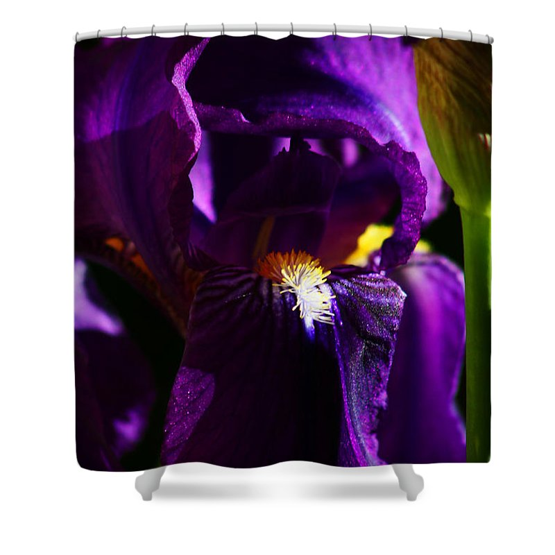 Flower Shower Curtain featuring the photograph Iris by Anthony Jones