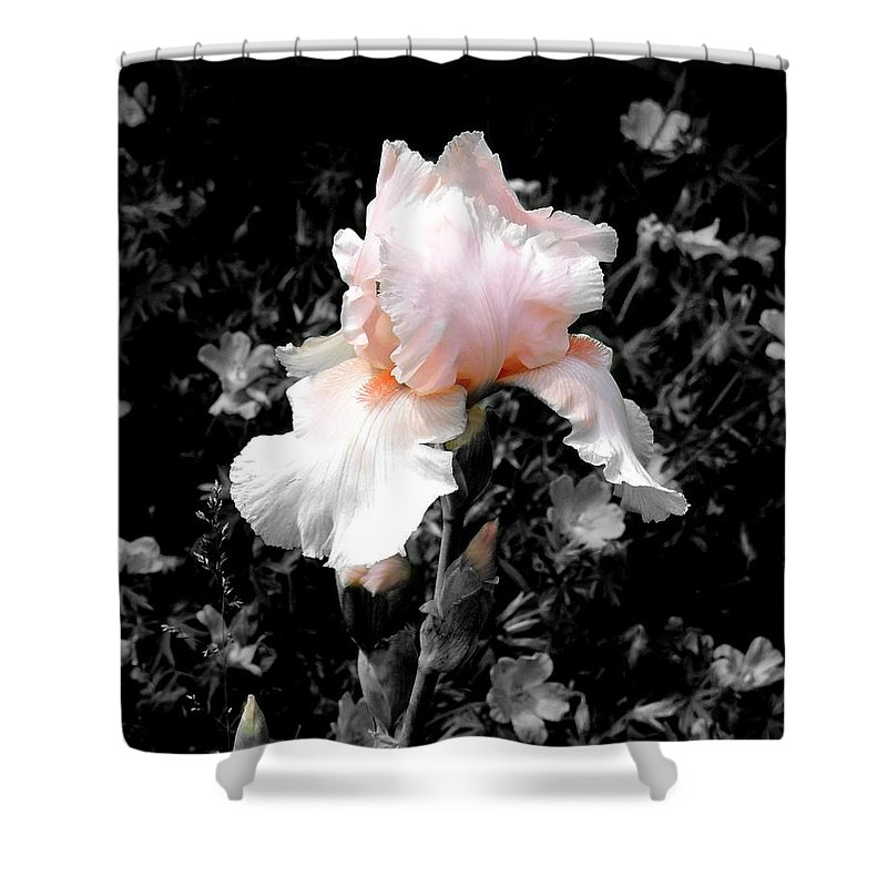 Flower Shower Curtain featuring the photograph Iris Emergance by Steve Karol
