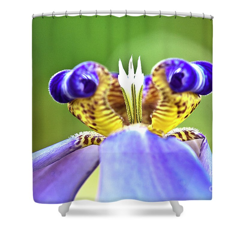 Macro Shower Curtain featuring the photograph Iris Flower by Heiko Koehrer-Wagner