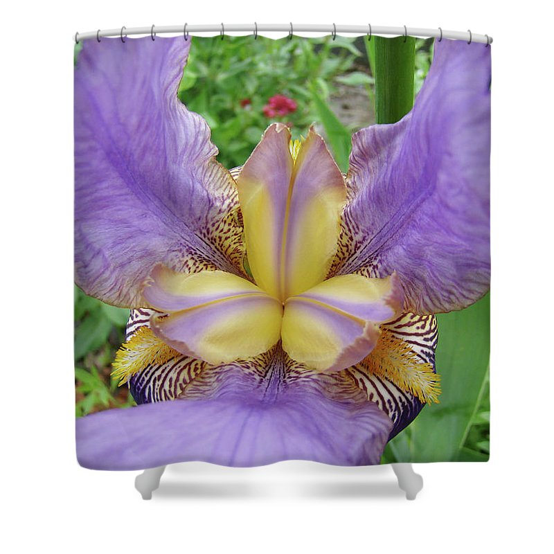 �irises Artwork� Shower Curtain featuring the photograph Iris Flower Lavender Purple Yellow Irises Garden 19 Art Prints Baslee Troutman by Baslee Troutman