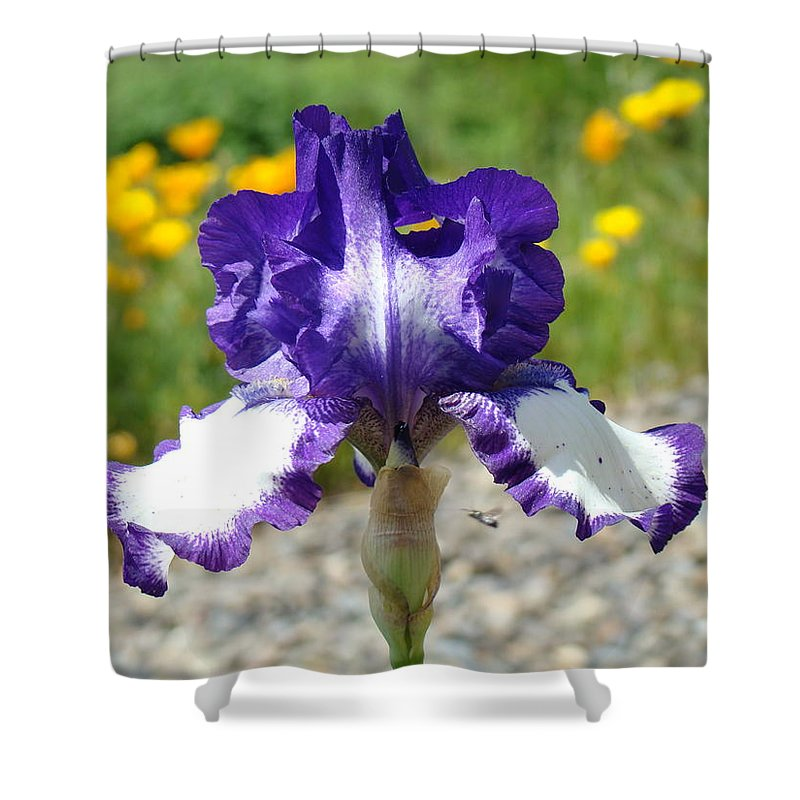 �irises Artwork� Shower Curtain featuring the photograph Iris Flower Purple White Irises Nature Landscape Giclee Art Prints Baslee Troutman by Baslee Troutman