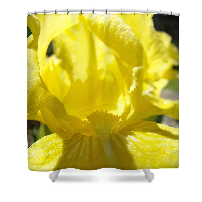 �irises Artwork� Shower Curtain featuring the photograph Iris Flower Yellow Macro Close Up Irises 30 Sunlit Iris Art Print Baslee Troutman by Baslee Troutman