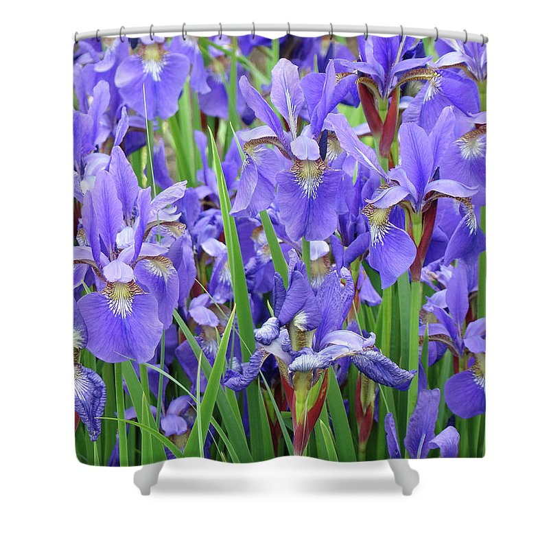�irises Artwork� Shower Curtain featuring the photograph Iris Flowers Artwork Purple Irises 9 Botanical Garden Floral Art Baslee Troutman by Baslee Troutman