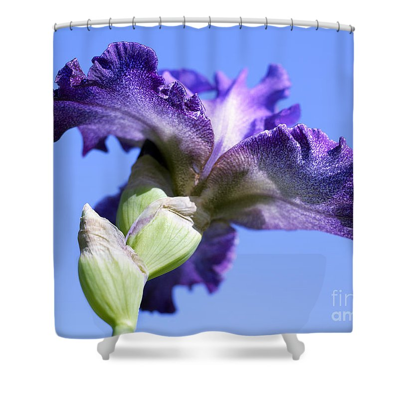 Genus Iris Shower Curtain featuring the photograph Iris Flowers by Tony Cordoza