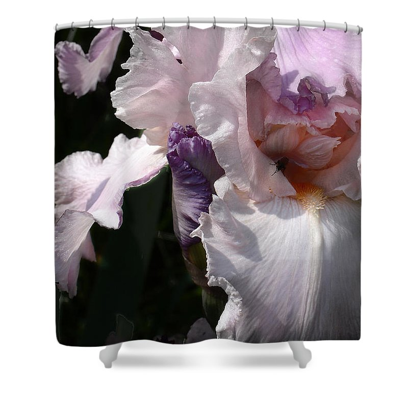Flower Shower Curtain featuring the photograph Iris Lace by Steve Karol