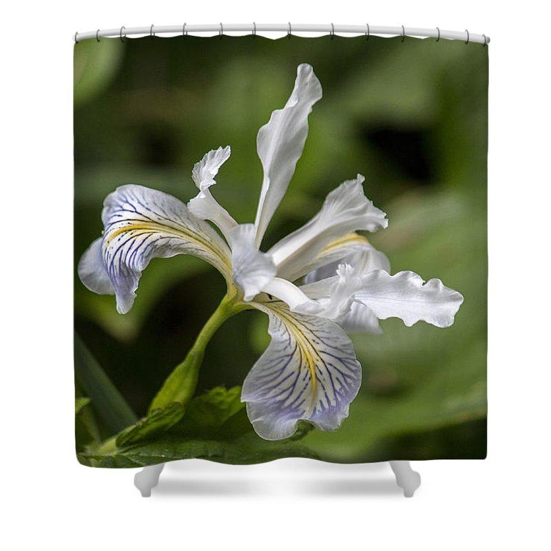 Iris Shower Curtain featuring the photograph Iris Profile by Travis Souza