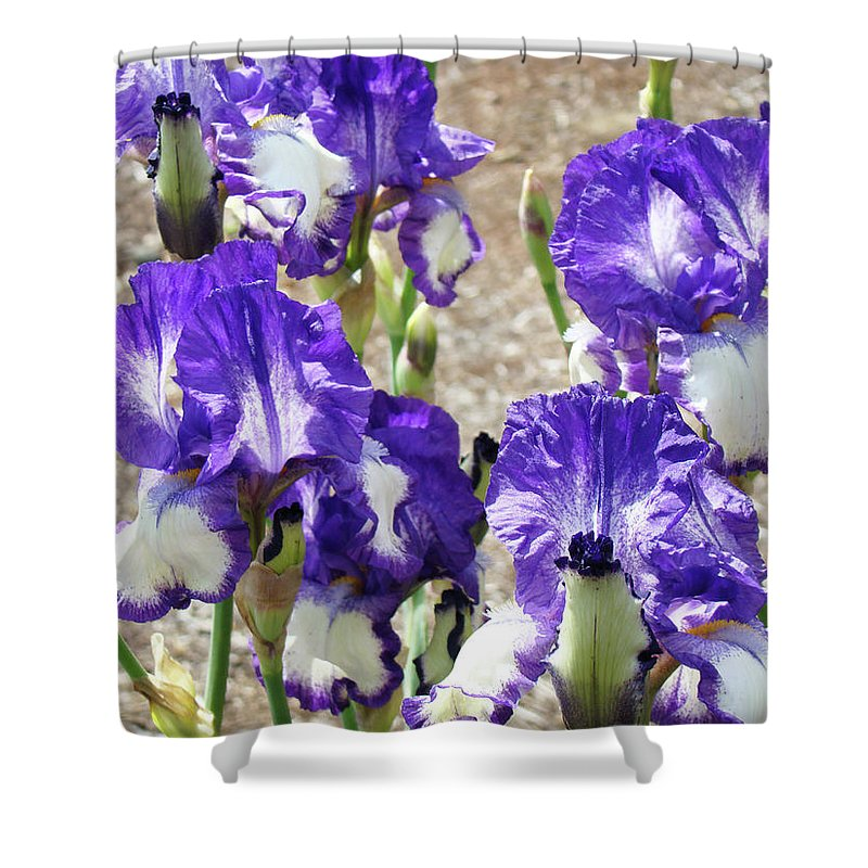 Iris Shower Curtain featuring the photograph Irises Floral Art Iris Flowers Purple White Baslee Troutman by Baslee Troutman