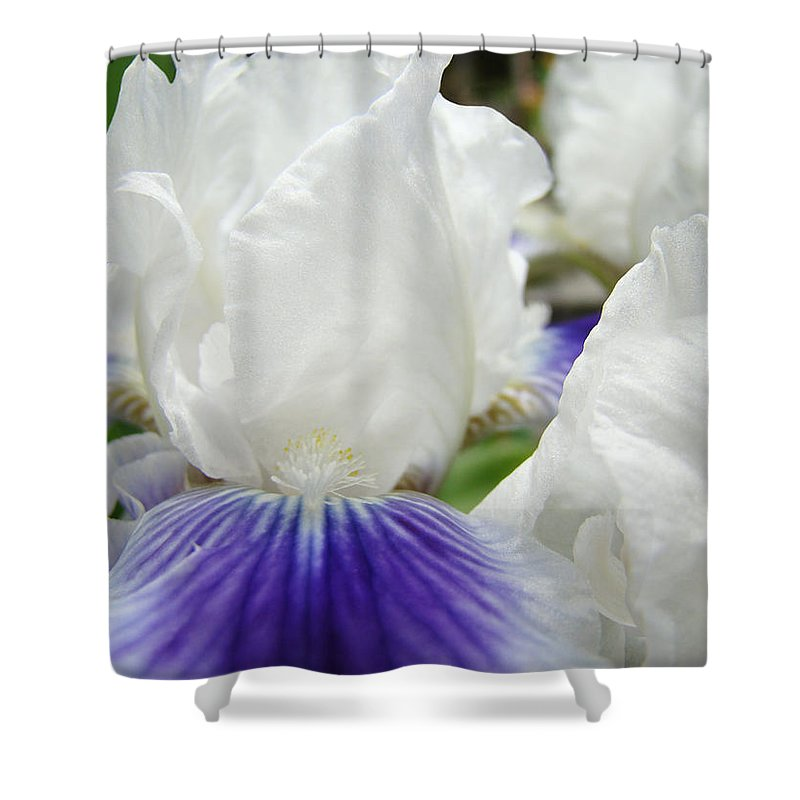 Iris Shower Curtain featuring the photograph Irises Flowers Art Print Gifts White Purple Iris Flower by Baslee Troutman
