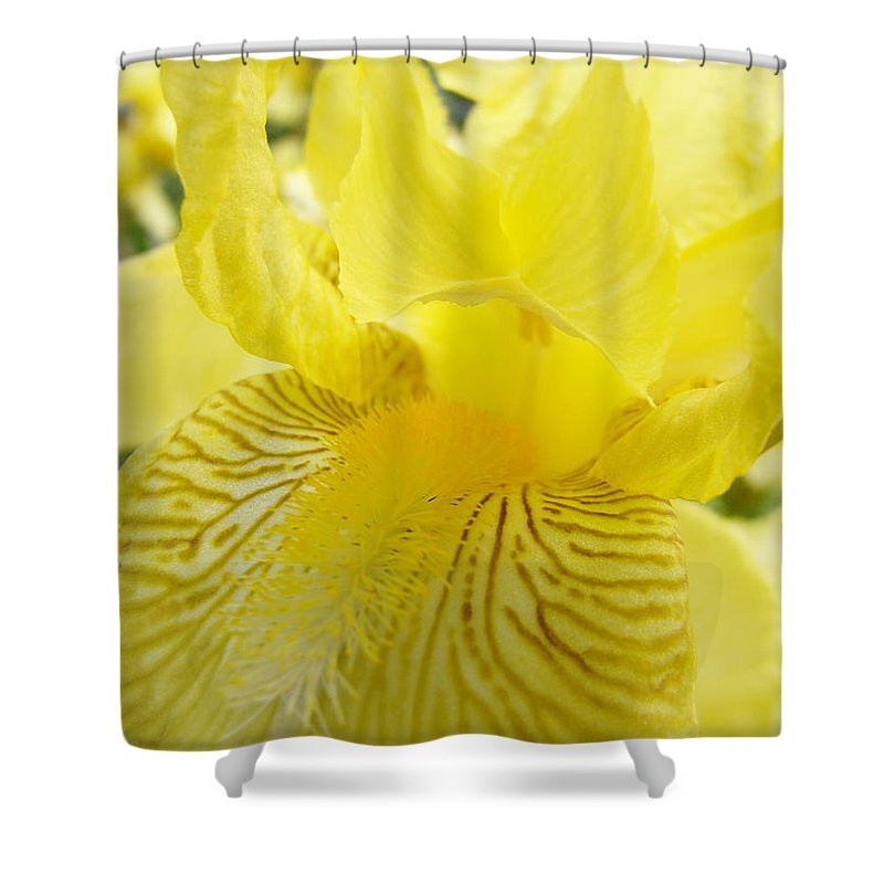 �irises Artwork� Shower Curtain featuring the photograph Irises Yellow Brown Iris Flowers Irises Art Prints Baslee Troutman by Baslee Troutman