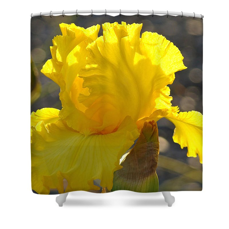 Iris Shower Curtain featuring the photograph Irises Yellow Iris Flowers Art Prints Floral Canvas Baslee Troutman by Baslee Troutman