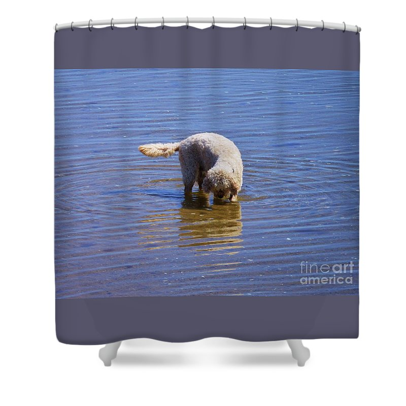 Dog Art Pet Portrait Outdoors Whimsical Cute Water Reflections Canine Unique Moment Provincetown Happy Ripples Metal Frame Canvas Print Poster Print Available On Greeting Cards Tote Bags Mugs Shower Curtains T Shirts And Phone Cases Shower Curtain featuring the photograph Is That Me ? by Poet's Eye
