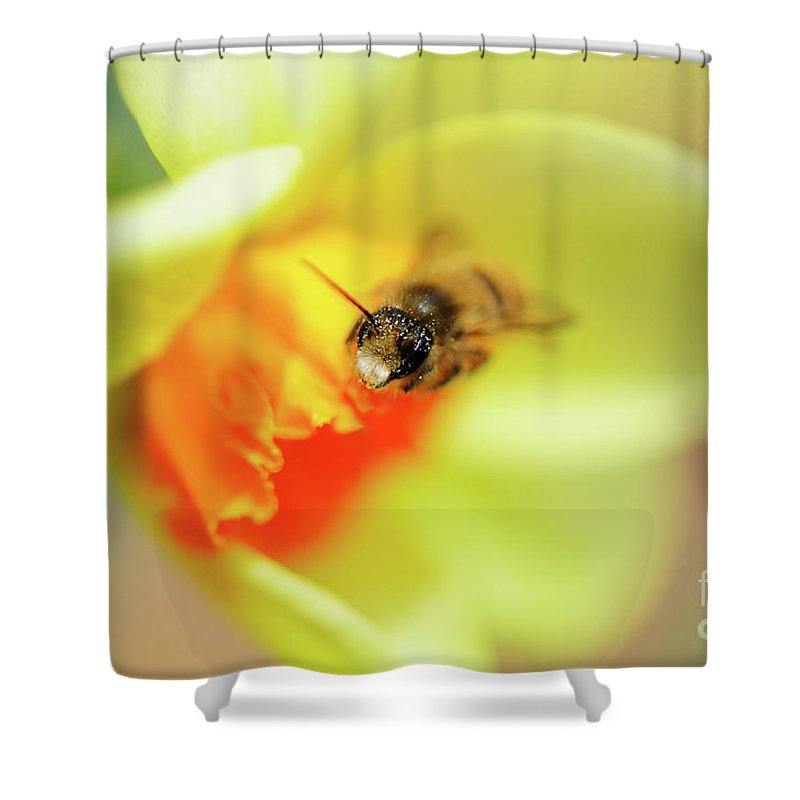 Bee Shower Curtain featuring the photograph It Just Wouldn't Bee Spring Without ... by Lois Bryan