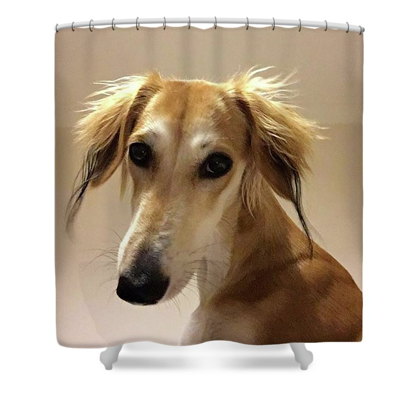 Dogsofinstagram Shower Curtain featuring the photograph It Looks Like It Will Be A Bad Hair Day by John Edwards