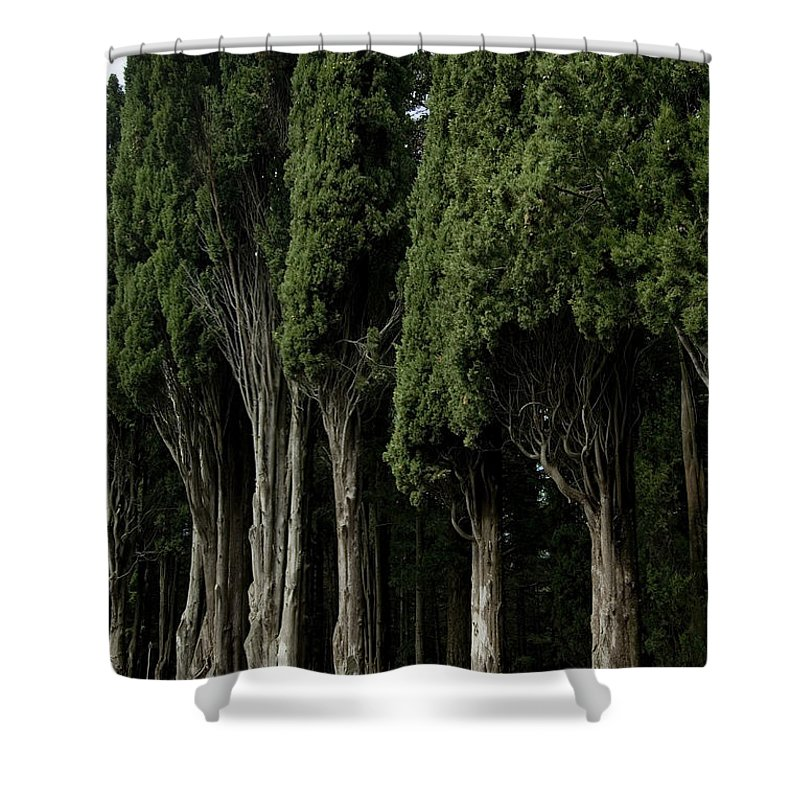 Photography Shower Curtain featuring the photograph Italian Cypress Trees Line A Road by Todd Gipstein