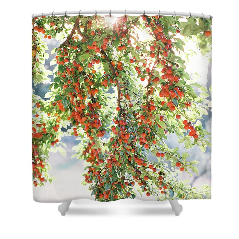 Italy Shower Curtain featuring the photograph Italian Plum Tree by Seth Mourra