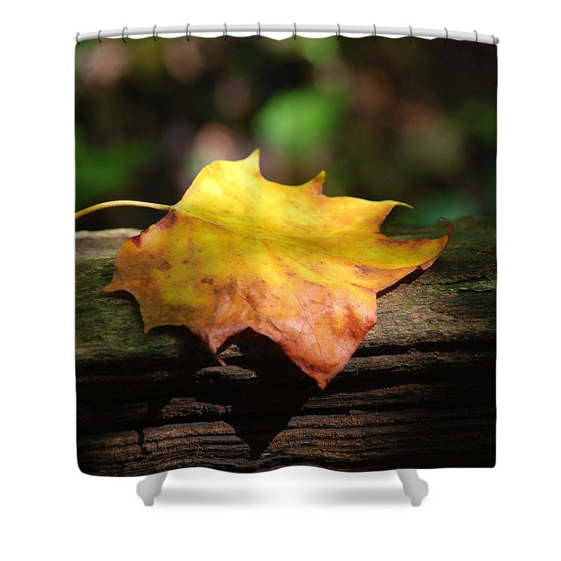 Photography Shower Curtain featuring the photograph Its Fall by Susanne Van Hulst
