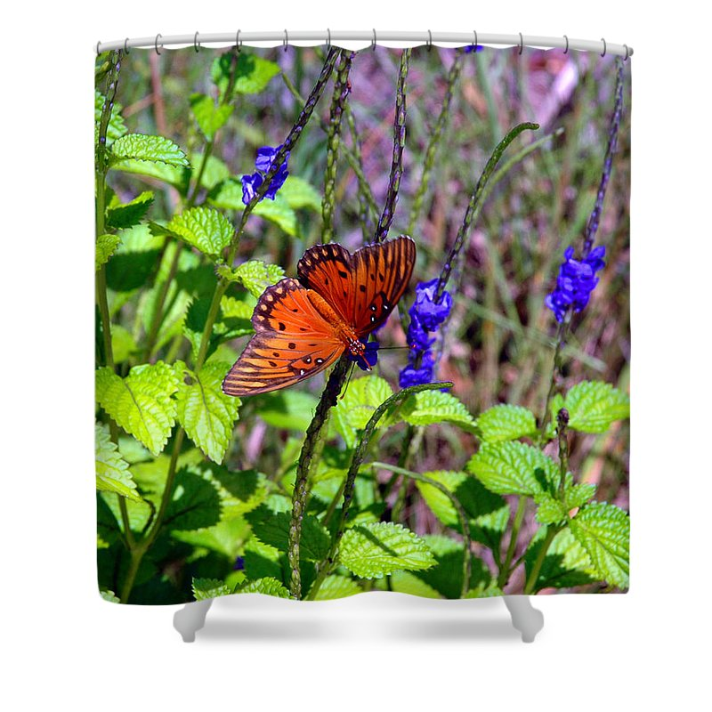Butterfly Shower Curtain featuring the photograph Its Summer by Susanne Van Hulst