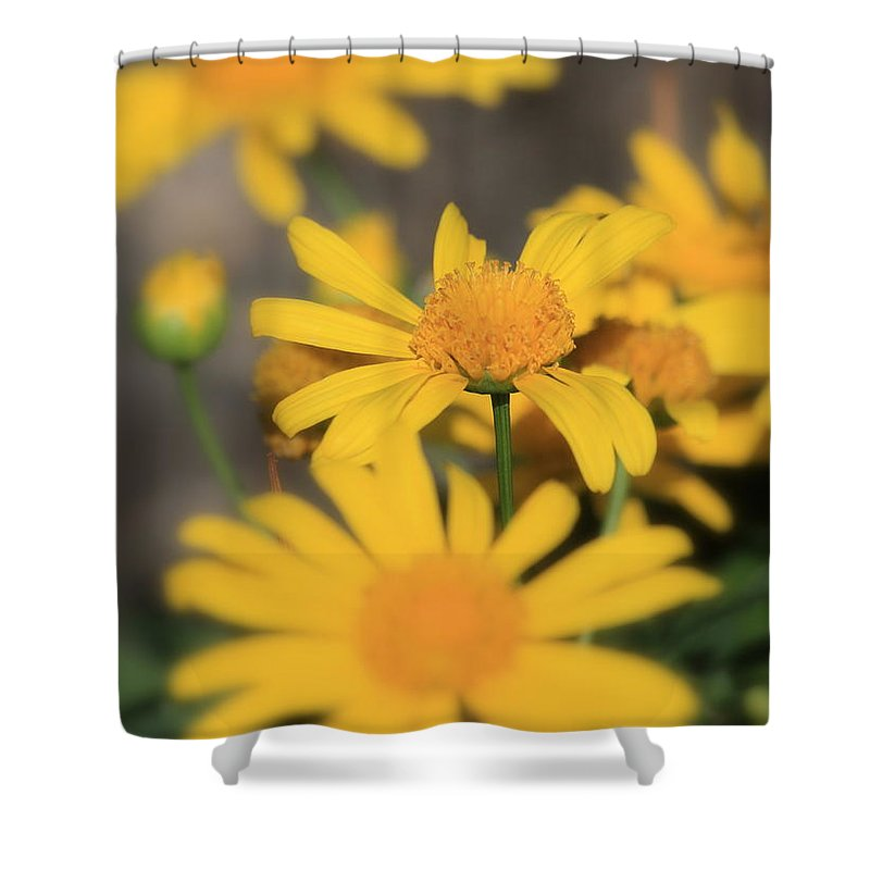 Daisy Shower Curtain featuring the photograph It's Your Day To Shine by Carol Groenen