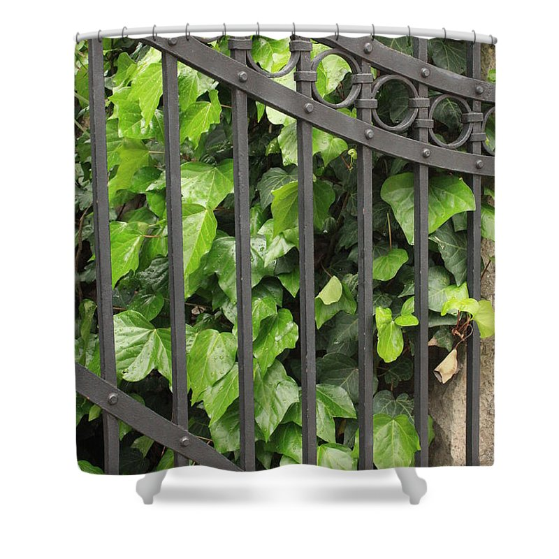 Ivy And Iron Gate Shower Curtain featuring the photograph Ivy And Gate by Carol Groenen