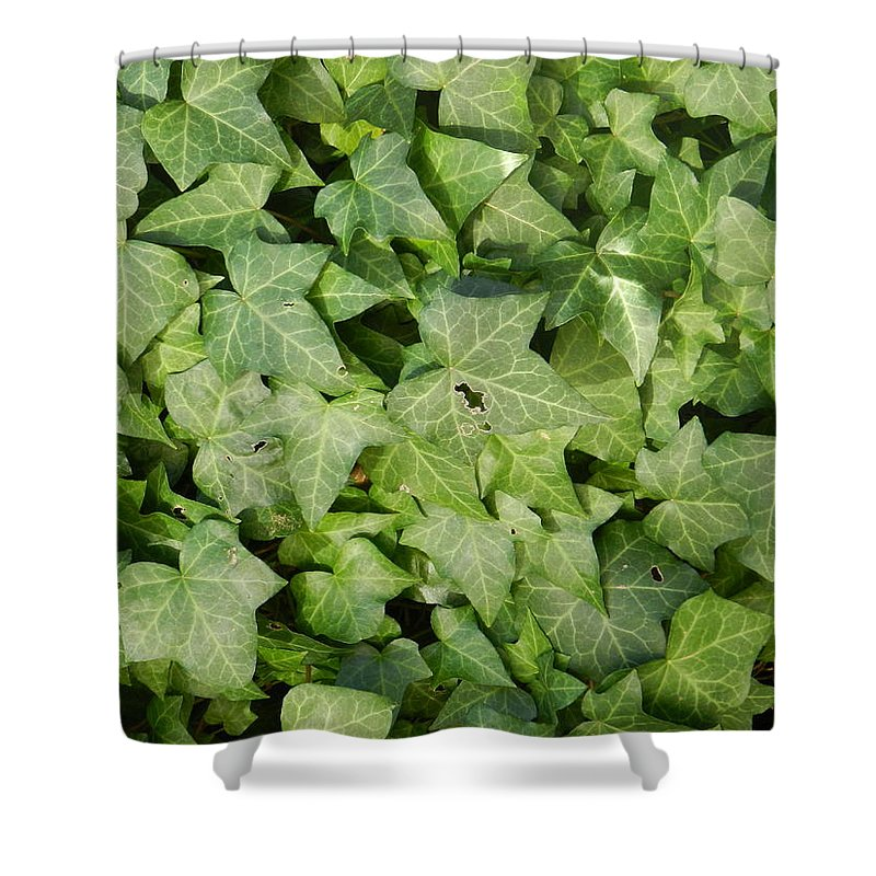 Screen Cover Shower Curtain featuring the photograph Ivy Green by ML Everhart