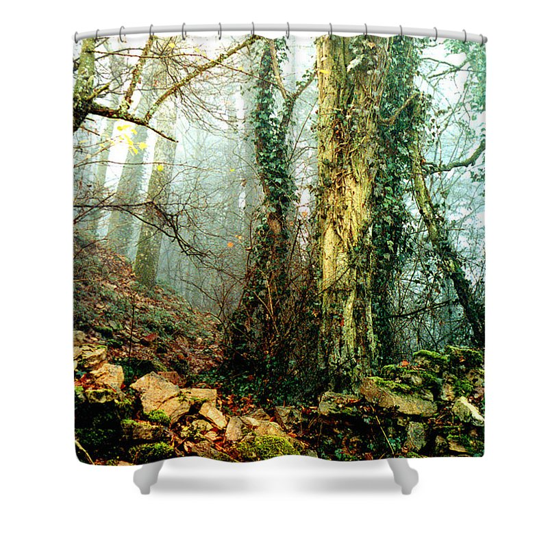 Ivy Shower Curtain featuring the photograph Ivy In The Woods by Nancy Mueller