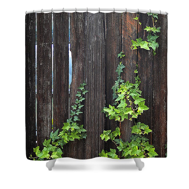 Clay Shower Curtain featuring the photograph Ivy On Fence by Clayton Bruster