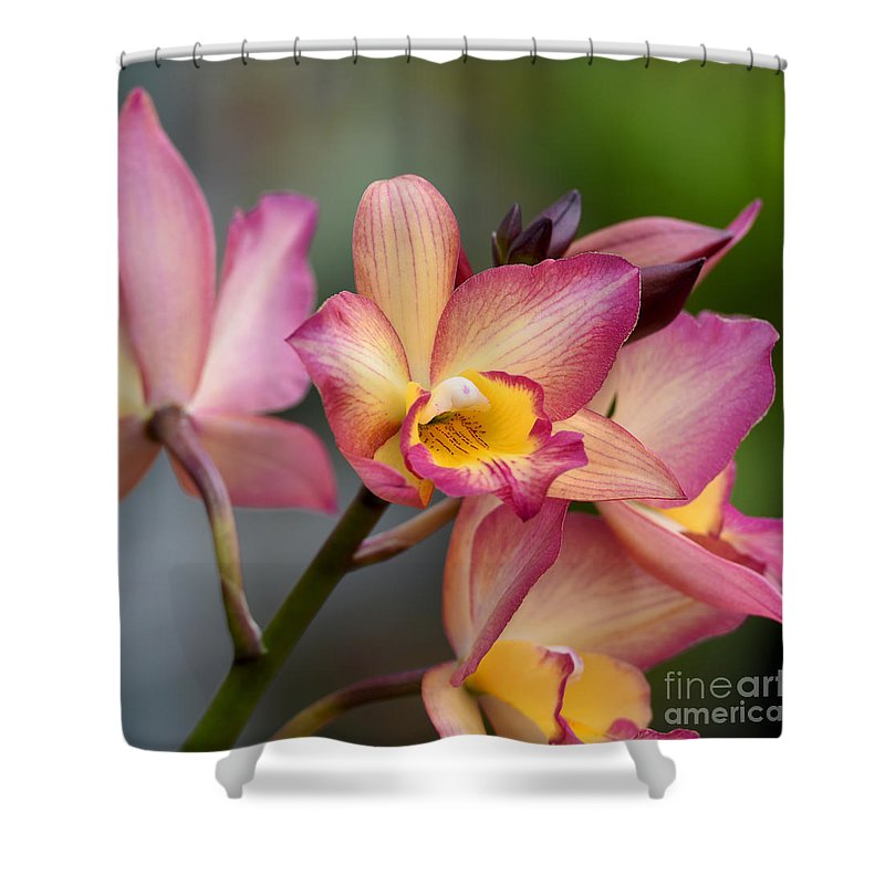 Orchid Shower Curtain featuring the photograph Iwanagara 9936 by Terri Winkler