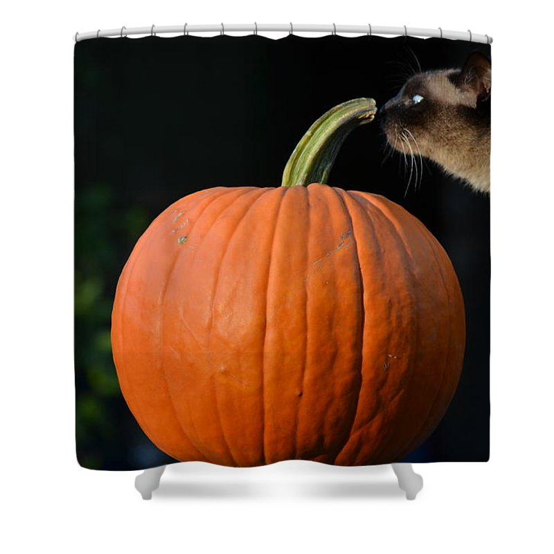 Pumpkin Orange Jack Molly Cat Shower Curtain featuring the photograph Jack And Molly by Patricia Caldwell