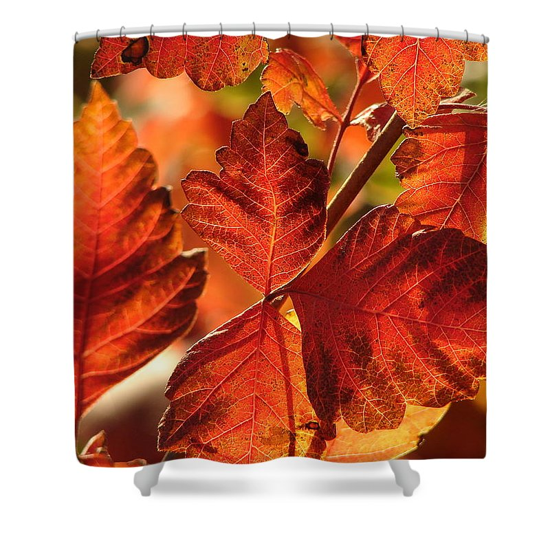 Photograph Shower Curtain featuring the photograph Jack Painted My Yard by J R Seymour