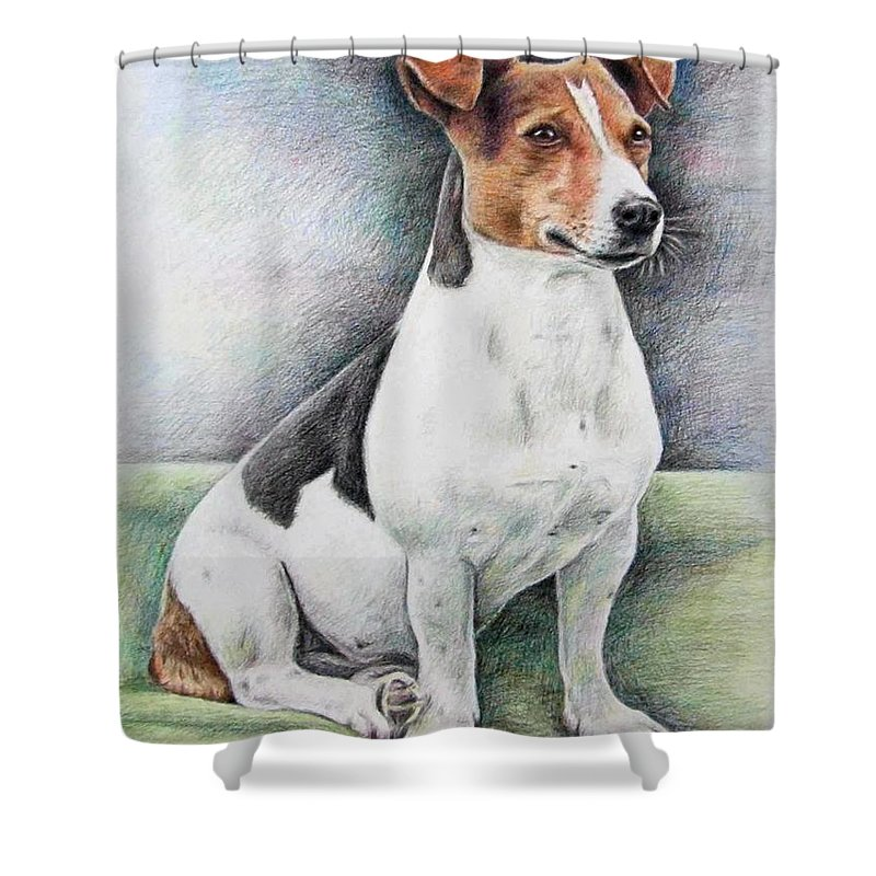 Dog Shower Curtain featuring the drawing Jack Russell Terrier by Nicole Zeug
