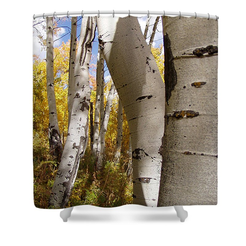 Trees Shower Curtain featuring the photograph Jackson Hole Wyoming by Amanda Barcon