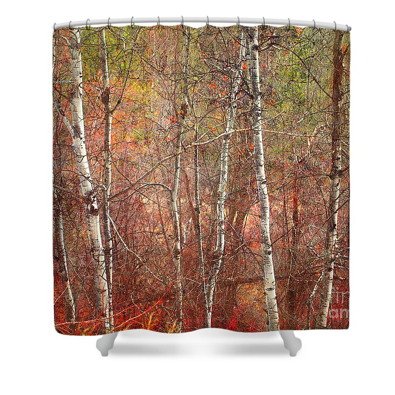 Trees Shower Curtain featuring the photograph January 21 2010 by Tara Turner