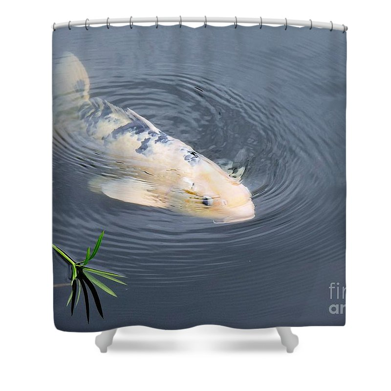 Japanese Shower Curtain featuring the photograph Japanese Koi Fish by Beth Williams
