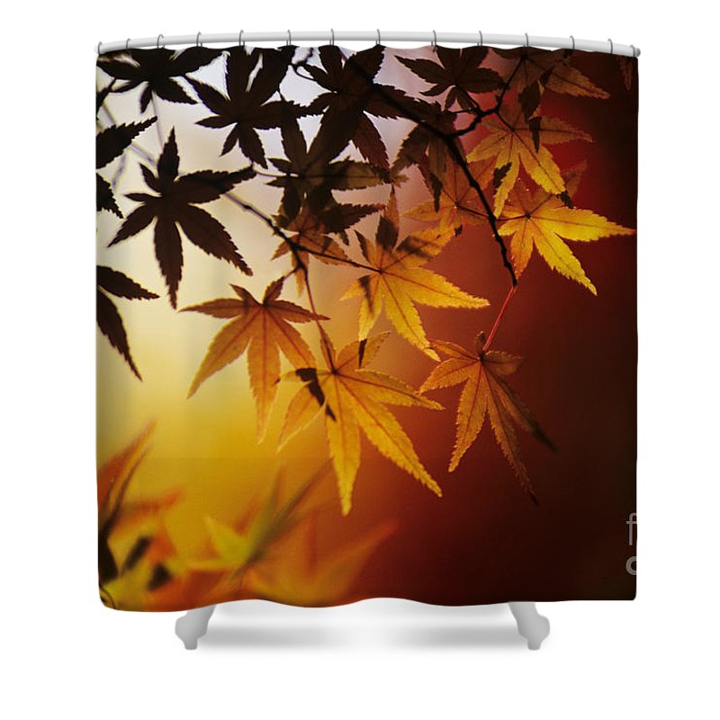 Allan Seiden Shower Curtain featuring the photograph Japanese Maple Leaf by Allan Seiden - Printscapes