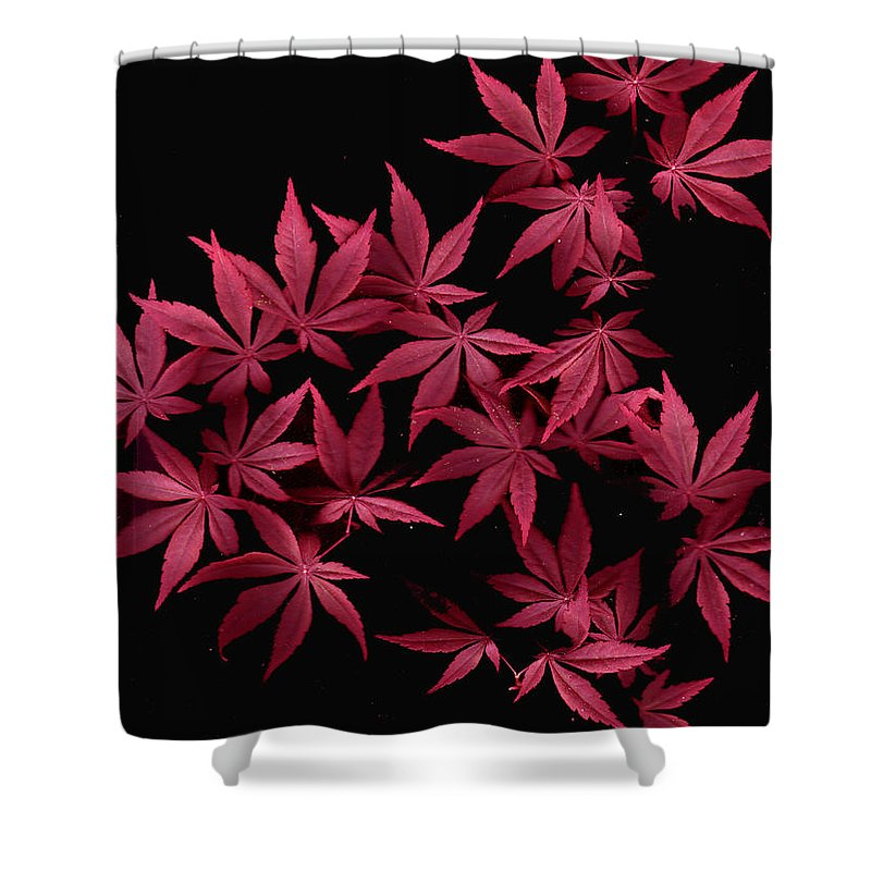 Japanese Maple Shower Curtain featuring the photograph Japanese Maple Leaves by Wayne Potrafka