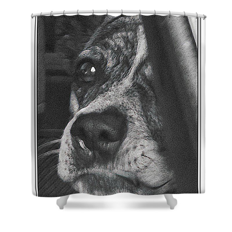 Dog Shower Curtain featuring the photograph Jazz by Karen W Meyer