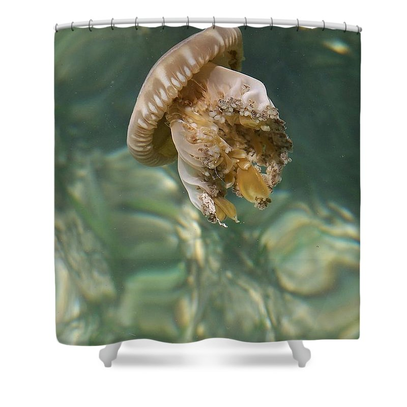 Jelly Shower Curtain featuring the photograph Jelly Belly by Gale Cochran-Smith