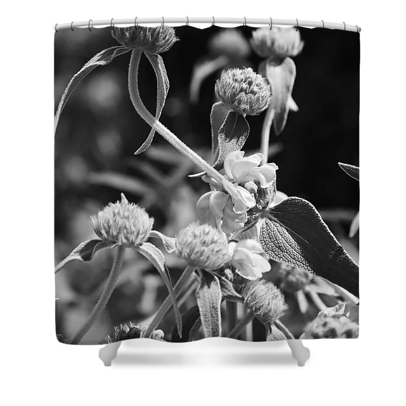 Herbs Shower Curtain featuring the photograph Jerusalem Sage by Kathy McClure