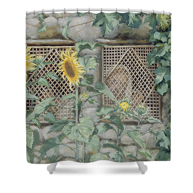 Jesus Looking Through A Lattice With Sunflowers Shower Curtain featuring the painting Jesus Looking Through A Lattice With Sunflowers by Tissot