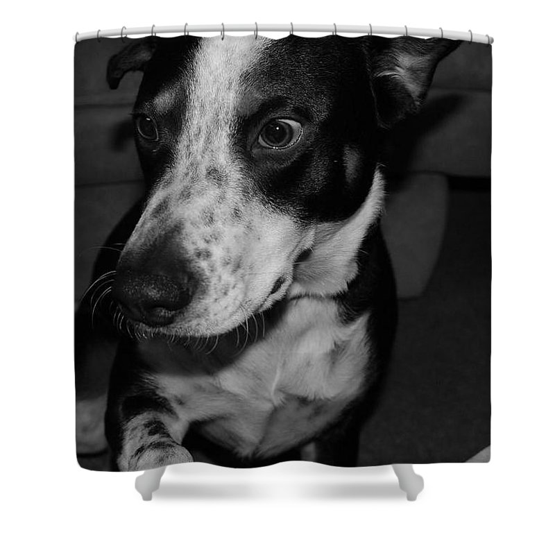 Black And White Shower Curtain featuring the photograph Jimmy by Rob Hans