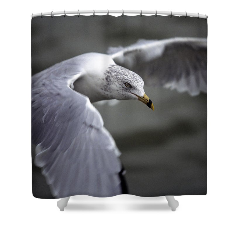 Bird Shower Curtain featuring the photograph Johnathan Livingston Seagull by John Harmon