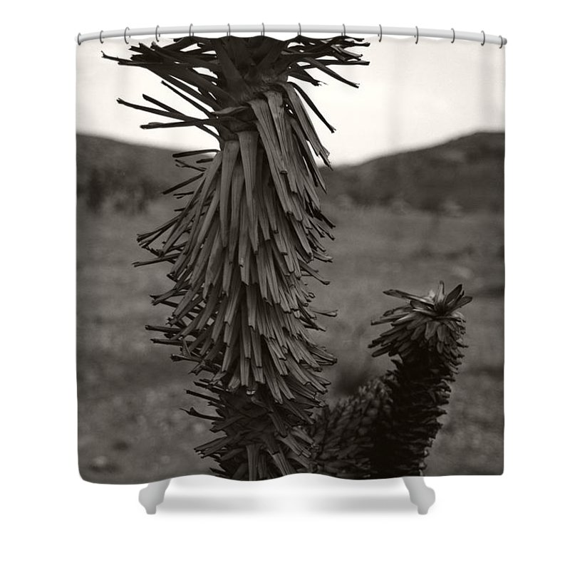 Shower Curtain featuring the photograph Joshua Top Over Hills by Heather Kirk