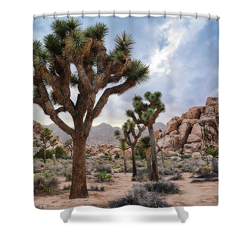 Joshua Tree Shower Curtain featuring the photograph Joshua Tree Summer Monsoon by Kyle Hanson