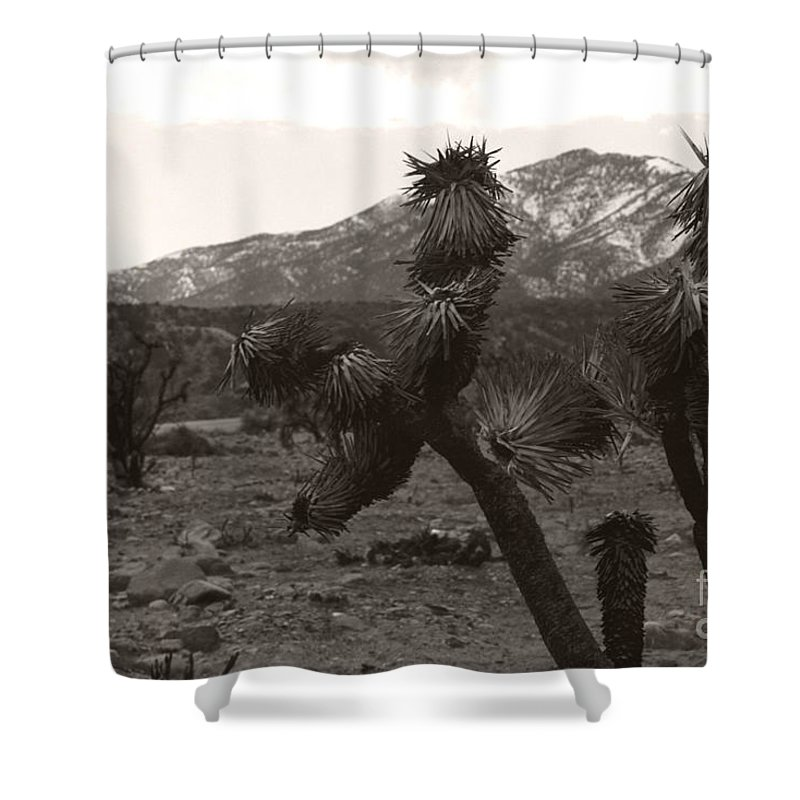 Shower Curtain featuring the photograph Joshua With Snow Capped Mountain by Heather Kirk