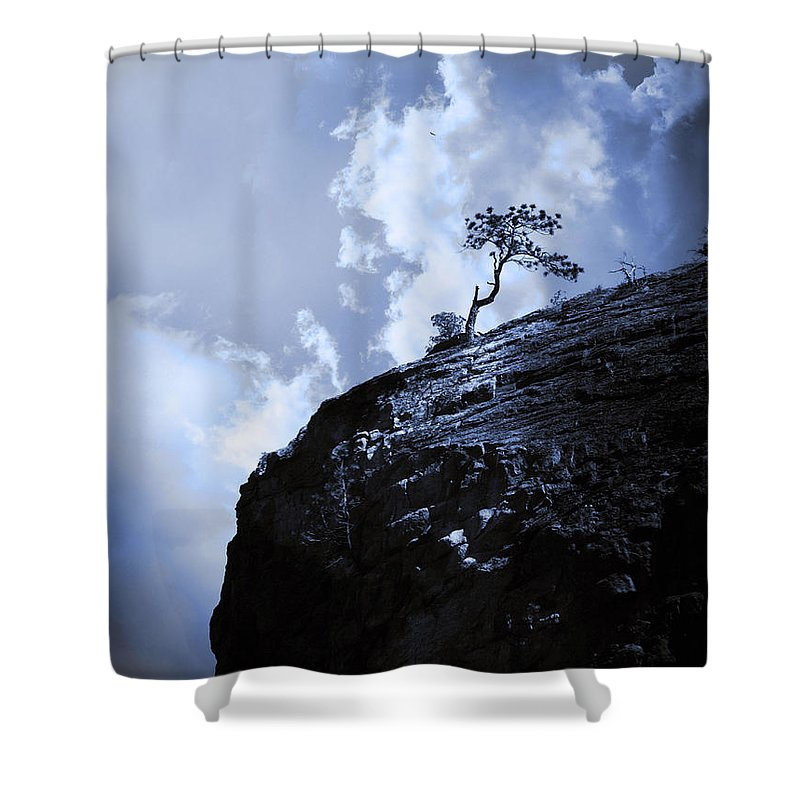 Tree Shower Curtain featuring the photograph June 14 2010 by Tara Turner