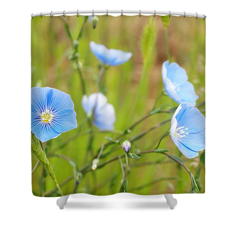 Flowers Shower Curtain featuring the photograph June 6 2010 by Tara Turner