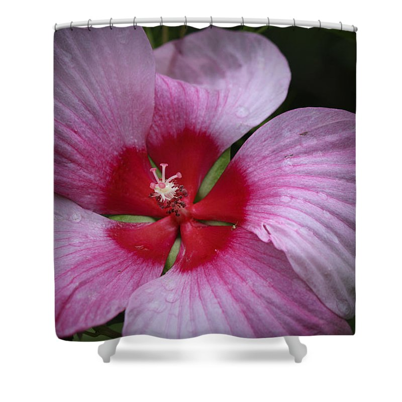 Hibiscus Shower Curtain featuring the photograph Junes Hibiscus 2 by Teresa Mucha