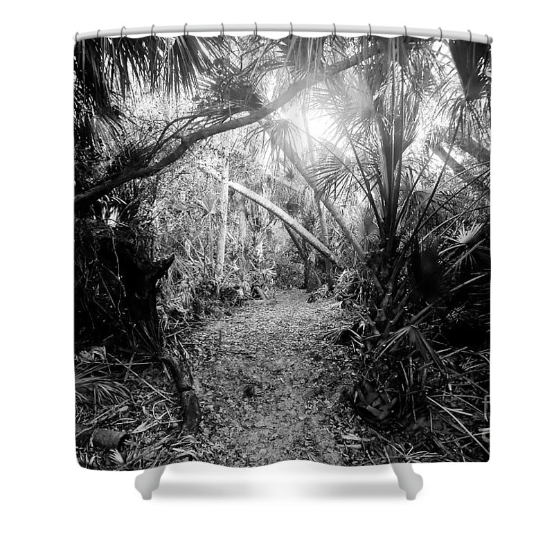 Jungle Shower Curtain featuring the photograph Jungle Trail by David Lee Thompson